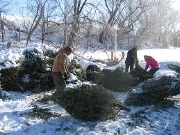 christmas tree recycling ogle county