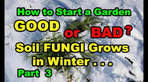 how to start a vegetable garden for beginners good or bad how to start vegetable garden for beginners with