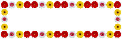 gerbera colors gerbera images pixabay free pictures