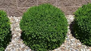 gardening for pest control growing shrubs and bushes low
