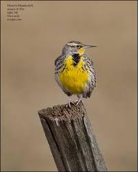 brews birds bathrooms and beer birding the wallowa valley of