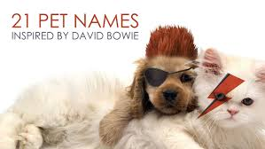 david bowie pet u0027s names inspired by youtube