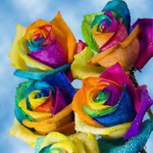 purple roses for sale rainbow roses for sale tie die kaleidoscope roses global