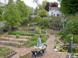 alternatives to grass in backyard reducing our lawn our habitat garden