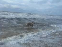 dog friendly surfside beach tx