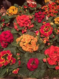 best flower beds in minnesota wcco cbs minnesota