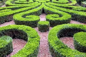 cut 22 ideas for garden design spring buchsbaum interior design