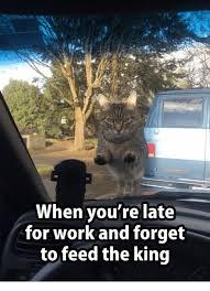 Working Cat Meme - 25 best memes about grumpy cat grumpy cat memes
