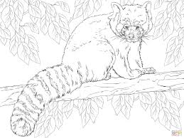 red panda sitting on branch coloring page free printable