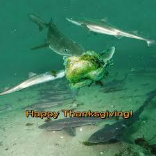 how we celebrate thanksgiving happy thanksgiving u2013 ya like dags