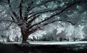 hi def pics gorgeous winter trees