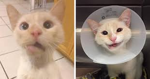 Smiling Cat Meme - rescue cat turns broken jaw into gorgeous smile bored panda