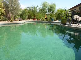 trees around a pool type recommendations and distance house