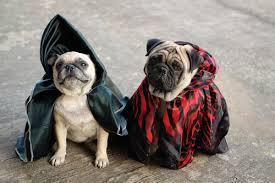 Chihuahua Halloween Costumes Today U0027s Pets U2013 Dogs Halloween Costumes