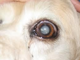 bluetick coonhound dander breed info riverview florida veterinarians brandon lakes