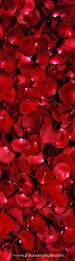 Romantic Bedroom Ideas With Rose Petals Best 25 Red Rose Petals Ideas On Pinterest Red Wedding