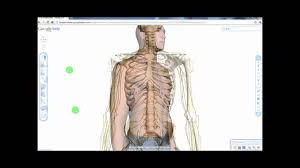 Google Body Anatomy Google Body Google Labs Hd Youtube