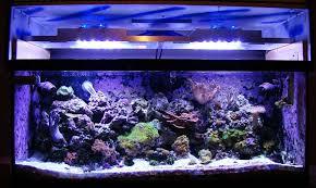 Aquarium Led Lighting Fixtures Saltwater Aquarium Led Lighting And Diy Led Reef Tank Light With