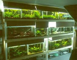 Aquascape Shop Gsas The Gadget Corner Fishroom