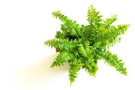 Plante Artificielle Exterieur Ikea by Plante De Bureau Pas Cher Pot En Plastique Blanc Pour Plantes