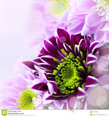 closeup of spring flower bouquet royalty free stock image image