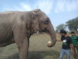 3 Blind Men And The Elephant 60 Year Old Blind Elephant Beaten By Her Owners Finally Gets