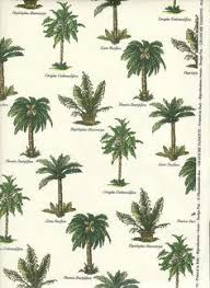 palm tree guide with illustrations of different types of palm