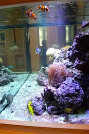 the gracious posse designing around an aquarium