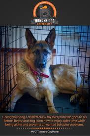 crate training 23 best dog training tips images on pinterest dog training tips