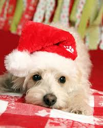 1286 best santas dogs and puppies images on pinterest noel