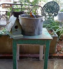 58 best potted plant ideas images on pinterest potted plants