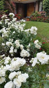42 best plant list images on pinterest plant front yards and