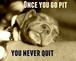 Pitbull Puppy Meme - real talk dog quotes pinterest real talk pit bull and dog