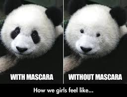 Truth Bear Meme - the truth about mascara the meta picture