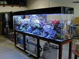 Aquarium Room Divider Gallery 12