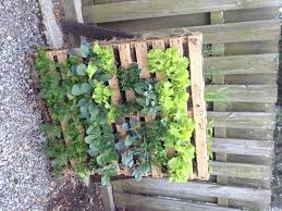 33 best great vegetable garden ideas images on pinterest veggie