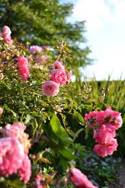 15 best michigan gardens images on pinterest botanical gardens