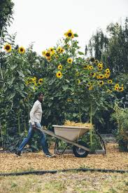80 best permaculture images on pinterest gardening gardens and