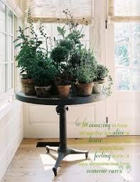 windowsill herb garden kit any outdoor lover gardener or foodie