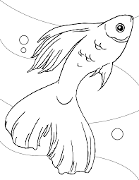 betta fish coloring page latest on angler fish tribal coloring