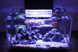 fluval edge marine light fluval edge tank builds and project journals northern valley reefers