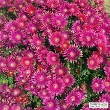 rock garden plants drought resistant plants high country gardens