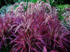the best perennials for zone 7 grasses perennials and gardens