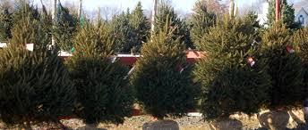 mclaughlin tree farm