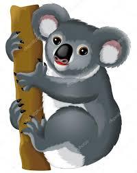 koala bear stock photos royalty free koala bear images