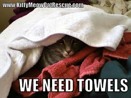 Carpet Cleaning Meme - donations kitty meow cat rescue
