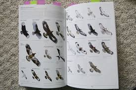 book review sibley guide to birds second edition u2013 prairie birder
