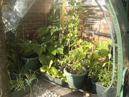 diy fan vegetable gardening forum