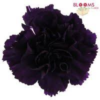 wholesale carnations purple moonvista carnations wholesale bloomsbythebox