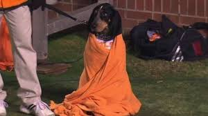 Tennessee Football Memes - volunteers mascot smokey the dog snuggles in blanket is super